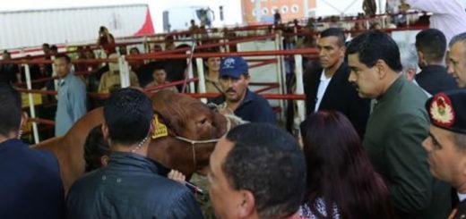 maduro-pide-a-unas-vacas-que-lo-apoyen-en-la-constituyente-550124