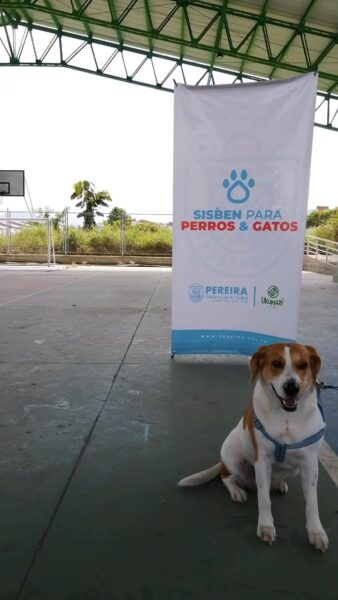 Más de 1.200 animales inscritos en el Sisbén para Perros y Gatos este año - Noticias de Colombia